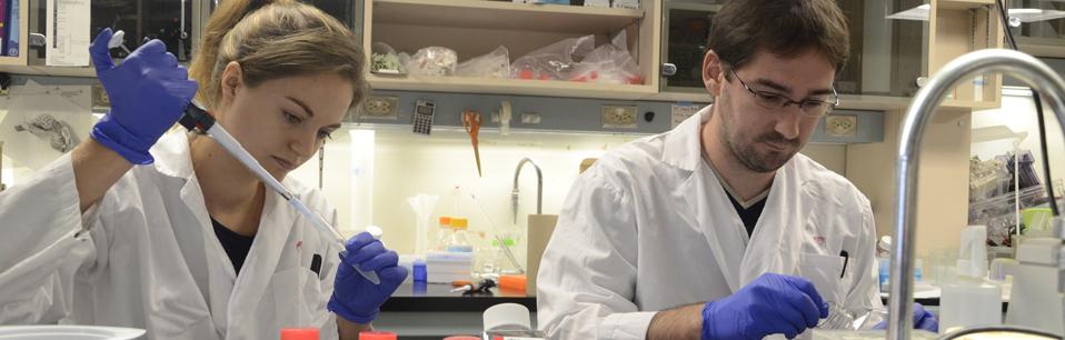 Brain Repair and Integrative Neuroscience Program - Research
