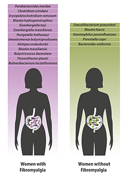 Bacterial species which were found in greater quantities in women with fibromyalgia (left) versus species which were found in greater quantities in women without fibromyalgia.